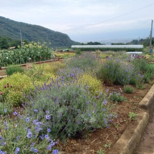 風香のハーブ農園